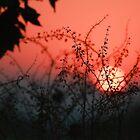 Sunset by Ann  Palframan