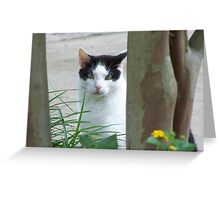 Cat Curiously Looking Through The Trees Greeting Card