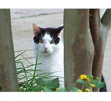 Cat Curiously Looking Through The Trees Photographic Print