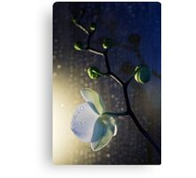 Shy and Shining Canvas Print