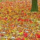 Fall colors by Intrepix