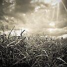 fields of gold by Dorit Fuhg