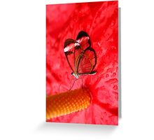 Glasswing on Anthurium Greeting Card