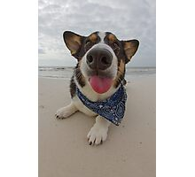 Salty Dog Photographic Print