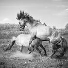 Horsepower in black & white by Henri Ton