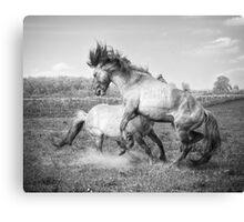 Horsepower in black & white Canvas Print
