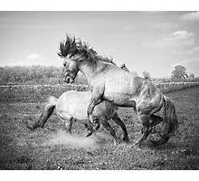 Horsepower in black & white Photographic Print