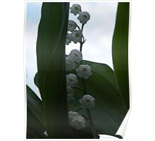 The lily of the valley.... Poster