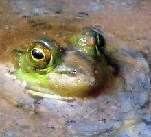 Peeking Peeper In Spring Swamp Water (not a recipe) by Jean Gregory  Evans
