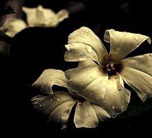 Wildflower on Black by Stan Owen