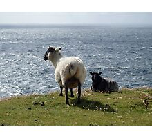 The sheep and the sea Photographic Print