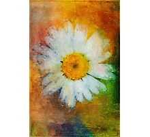 Daisy in Colors Photographic Print