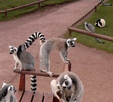 Limbering up for the Lemur Olympics by BevsDigitalArt