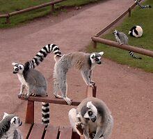 Limbering up for the Lemur Olympics by BevsDigitalArt