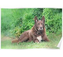 Reme the Red Dog Poster