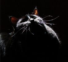 Black Kitty In Starlight by Jean Gregory  Evans