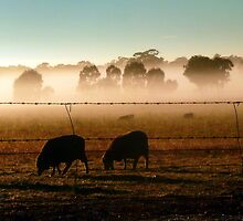 Grazing the mist by Julie Sleeman
