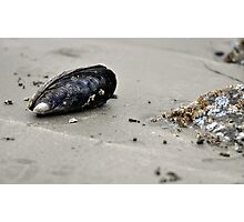 Shell on the beach Photographic Print