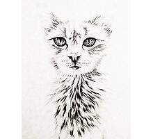 Drawing of Chic White Cat Photographic Print
