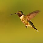 Hovering by Bill McMullen