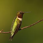 Ruby-throated Hummingbird by Bill McMullen