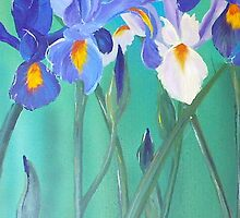 irises for cards by Almeta