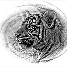Tiger B&W by Kristine Kowitz