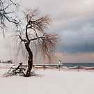 A Winter's Day at Lake Ontario-Canada by artgoddess
