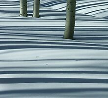Wasatch Aspen Snow Shadows 3 by twokonings