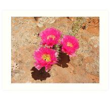 Escalante Cactus Art Print