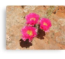 Escalante Cactus Canvas Print