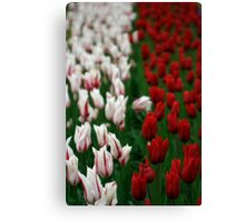 Color line - white&red Canvas Print
