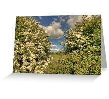 Whitethorn Hedge Greeting Card