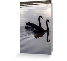 Mirroring Black Swans  Greeting Card