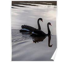 Mirroring Black Swans  Poster