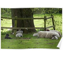 A black sheep in the family Poster