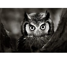 Whitefaced Owl Photographic Print