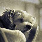 Digby by Lorraine Creagh