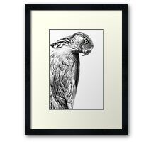 The Philippine Eagle Framed Print