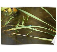 Blue Damsel Fly #5 Poster