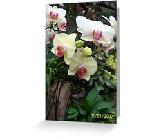 Flower of Asia Greeting Card