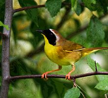 Common YellowThroat Warbler 10 by John Absher