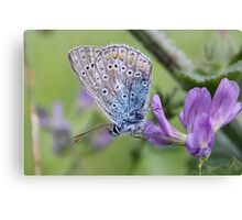 Mister Blue Loves Purple Canvas Print