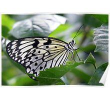 Paper Kite Poster