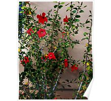 Flowers on a Wall Poster