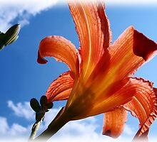 Reaching Toward Heaven by vigor