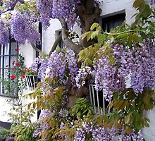 Wisteria Cottage by hjaynefoster