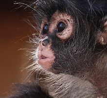 Young Spider Monkey by Alexa Pereira