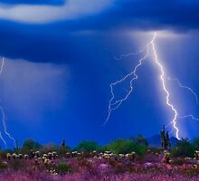 Colorful Sonoran Desert Storm by Bo Insogna
