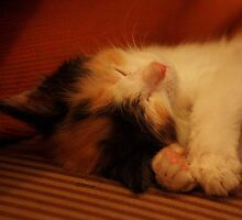 Sometimes I Sleep Like This to Look Extra Sweet! by meowiyer